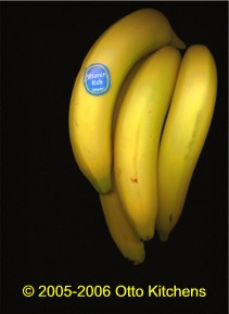 Scanned Bananas by Otto Kitchens